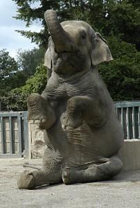Elefant-202x300
