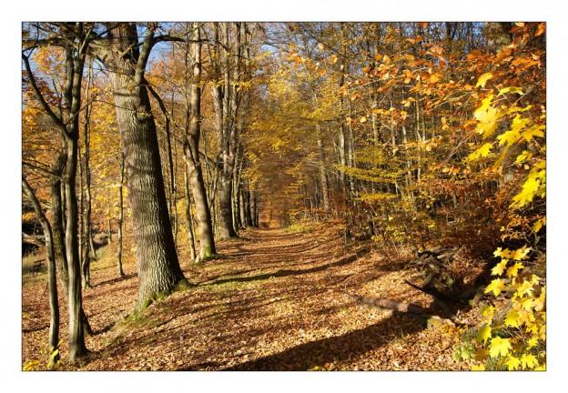Herbstwald-624x432
